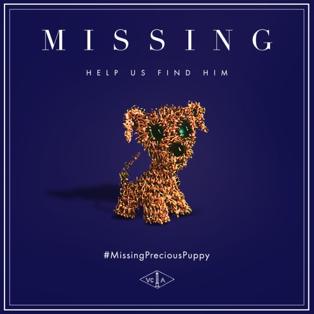 missingpreciouspuppy