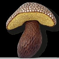 mushroom-Hemmerle diamands gold copper.sophiworldblog.com